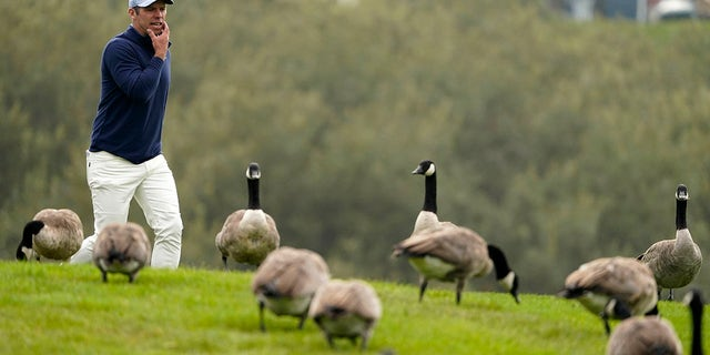 Paul Casey walks past a flock of geese on the 18th hole during the third round of the PGA Championship golf tournament at TPC Harding Park Saturday, Aug. 8, 2020, in San Francisco. (Associated Press)