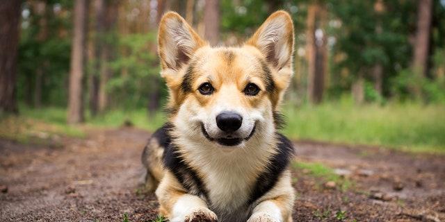 Petco will instead promote positive reinforcement training methods, which reward good behavior instead of punishing bad behavior. (iStock)