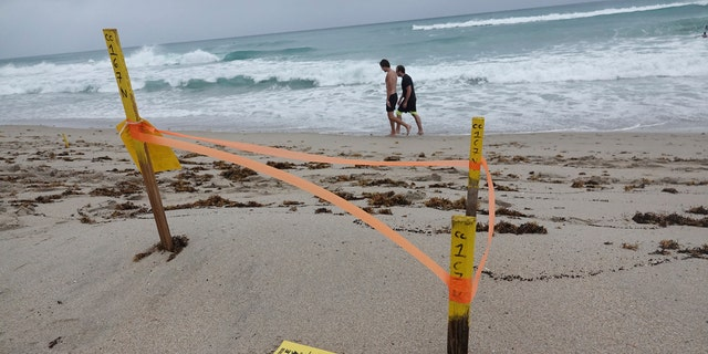 A turtle nest which was washed away in Delray Beach is seen, Sunday, Aug. 2, 2020, as Tropical Storm Isaias brushes past the East Coast of Florida.