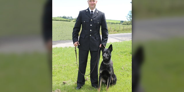 Le berger allemand Max, âgé de 2 ans, et son gardien, le consul de police Peter Lloyd, qui ont terminé leur formation de chien policier pour la police de Dyfed-Powys en février, ont participé à une vaste opération de recherche et de sauvetage sur le mont Pays de Galles lors de leur premier tour ensemble.  (Police Dyfed-Powys)