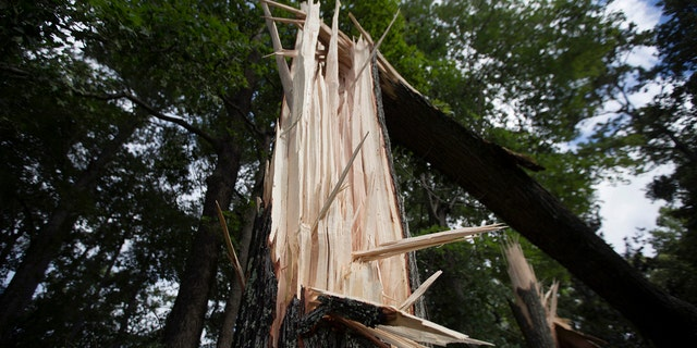 Two men who survived Hurricane Isaias as it made landfall in North Carolina died on Wednesday after they were struck by lightning while cleaning storm debris, according to officials. Trees can be seen damaged off North Landing road near the court house in Virginia Beach, Va.