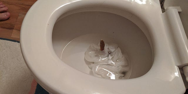 Stewart discovered the snake slither up through the bowl when she checked to see why the toilet wouldn't flush.