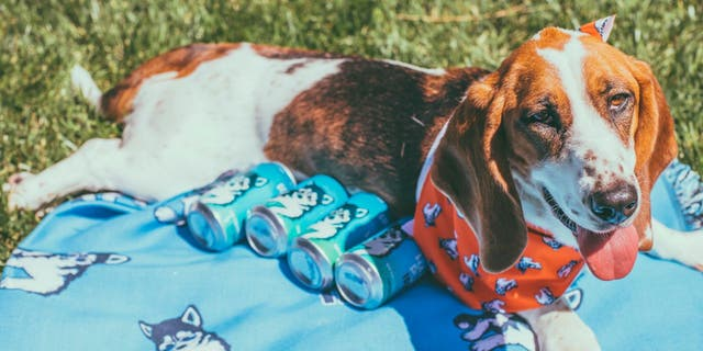 """Hazy Pup IPA has a """"light juicy body and crisp finish"""" with a tropical and citrus taste, according to the brewery. (Golden Road Brewing)"""