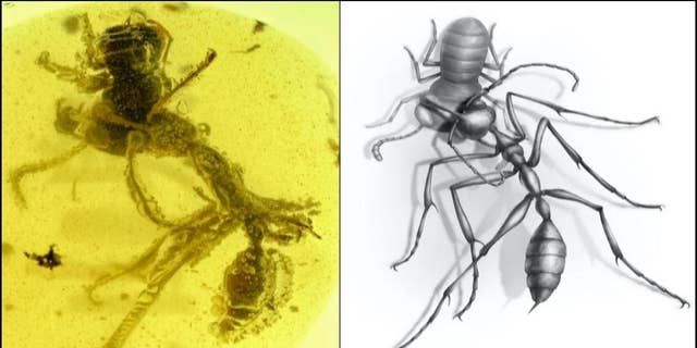 A fossil recently recovered from the age of the dinosaurs is giving scientists the most vivid picture yet of how one of the most enigmatic and fearsome groups of ants to exist once used their uncanny tusk-like mandibles and diverse horns to successfully hunt down victims for nearly 20 million years, before vanishing from the planet. (Credit: NJIT, Chinese Academy of Sciences and University of Rennes, France)