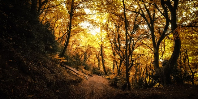 The Forest of Dean is located in Gloucestershire, a county in South West England. (iStock)