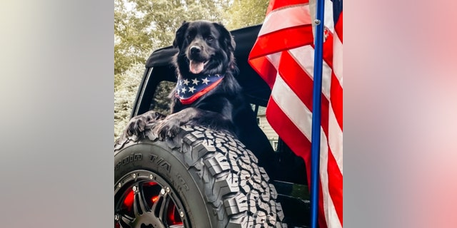 Jeep is holding a Top Canine contest for the dogs of its customers.