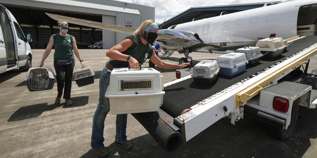 Houston SPCA staff members Linnea Wood, foreground, and Calista Stover carry pets from the Galveston Island Humane Society, onto a Wings of Rescue plane headed to Dallas/Fort Worth Tuesday, Aug. 25, 2020, in Houston, as Hurricane Laura threatens the Texas coast.