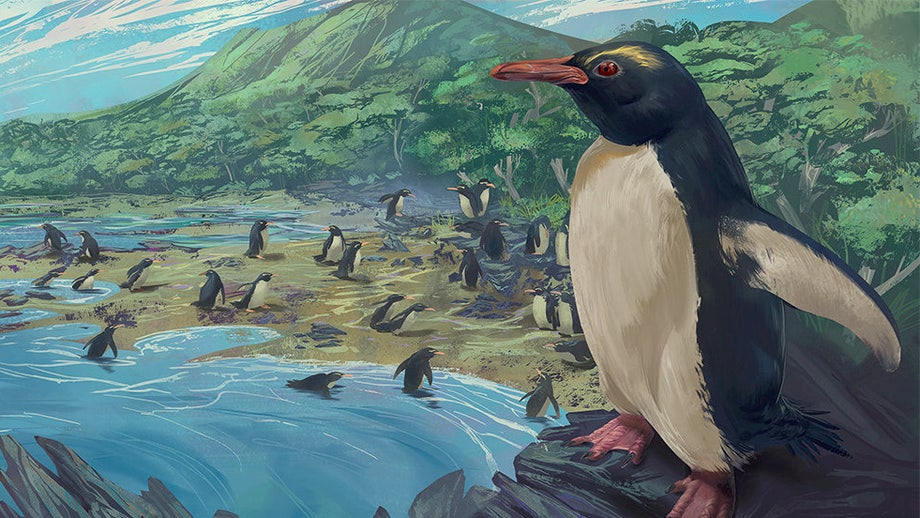 'Missing link' found? 3M-year-old red-eyed penguin could connect to modern-day sea birds
