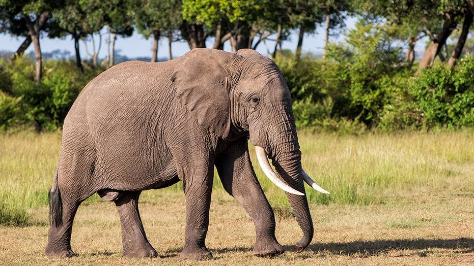 Meghan Markle narrating elephant documentary on Disney+