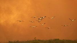 Brazil's Amazon forest, precious wetlands burn at historic levels