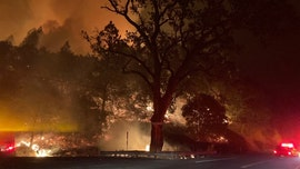 Wildfire erupts in California's Napa County, emergency evacuations over 'dangerous rate of speed'