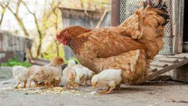 Salmonella outbreak sickens hundreds, yields warning from CDC: Don't 'kiss or snuggle' these animals