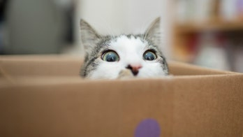 'Find my cat': Reddit user posts photo of living room, challenges Internet to find hidden pet