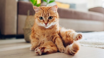 You might be feeding your cats wrong, according to a new study