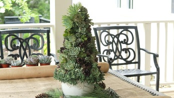 Succulent Christmas 'trees' are trending this holiday season