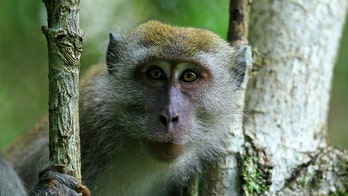 Monkey steals man's phone, proceeds to take hilarious selfies