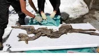 400-year-old mummified goat found in Italian Alps