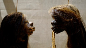 Oxford museum removes shrunken heads, human remains from display over racism concerns
