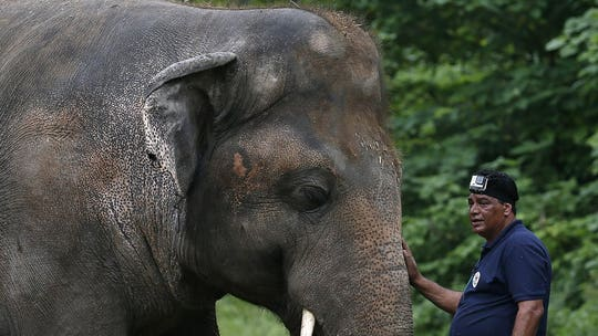 'World's loneliest elephant' cleared for relocation to a better facility outside of Pakistan