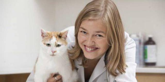"""Prof. Adronie Verbrugghe said the findings """" may surprise the veterinary community and many cat owners."""""""