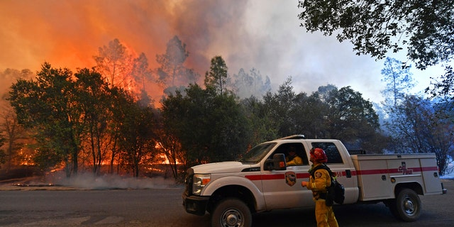 A firefighter glances up as trees begin to catch fire along Crystal Springs Road while battling the Glass Fire in St. Helena, Calif., on Sunday, Sept. 27, 2020.