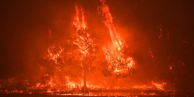 Trees burn in strong wind on the Silverado Trail as a hillside goes up in flames during the Glass Fire in St. Helena, Calif., on Sunday, Sept. 27, 2020.