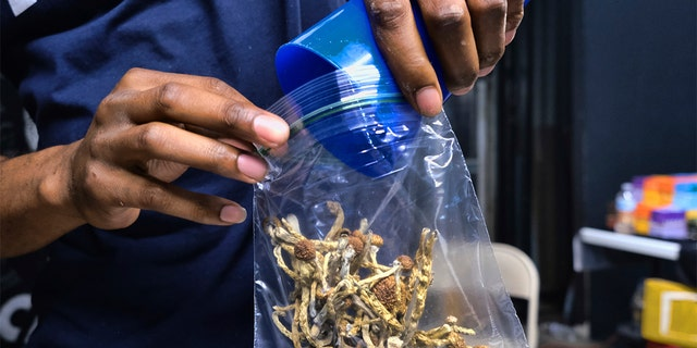 In this Friday, May 24, 2019 photo a vendor bags psilocybin mushrooms at a cannabis marketplace in Los Angeles. (Associated Press)