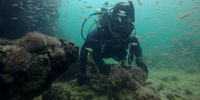 A diver explores the wreck.