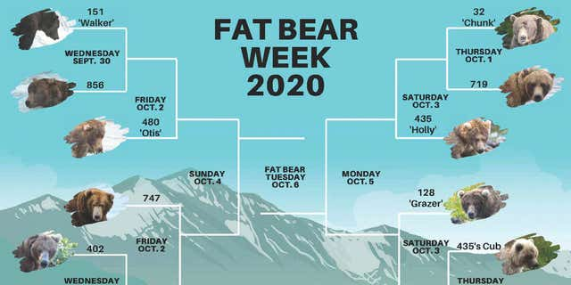 "Katmai National Park and Preserve's ""Fat Bear Week"" kicks off in September 2020."