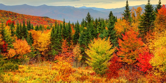 According to the U.S. Forest Service, certain species of trees produce certain colors.