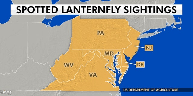 According to the U.S. Department of Agriculture, spotted lanternflies have reachedparts of New Jersey, Delaware, Maryland, Virginia and West Virginia.
