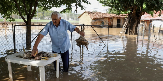 A man holds drowned poultry near his house at Magoula village, near Karditsa town, Saturday, Sept. 19, 2020.
