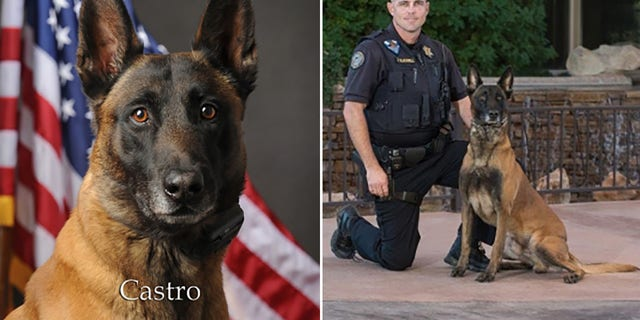 K-9 Castro served on the force for six years with his handler Officer Blackwell.
