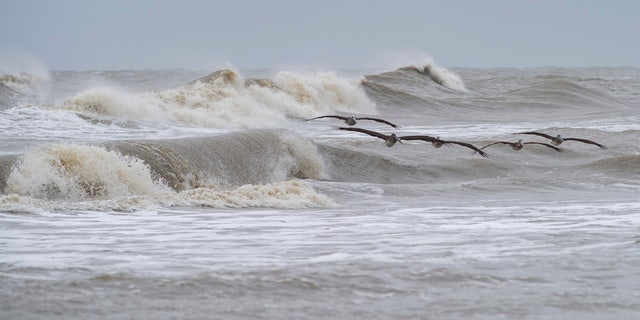 A squadron of pelicans navigates through the rough surf on Crystal Beach in the Bolivar Peninsula, Texas, on Sunday, Sept. 20, 2020.