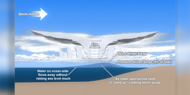 Wind and pressure components of hurricane storm surge