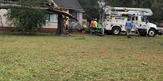Crews prepare to remove a large tree that fell on Todd Caroline's roof after strong winds from Hurricane Sally split it in three parts. (Fox News/ Charles Watson)