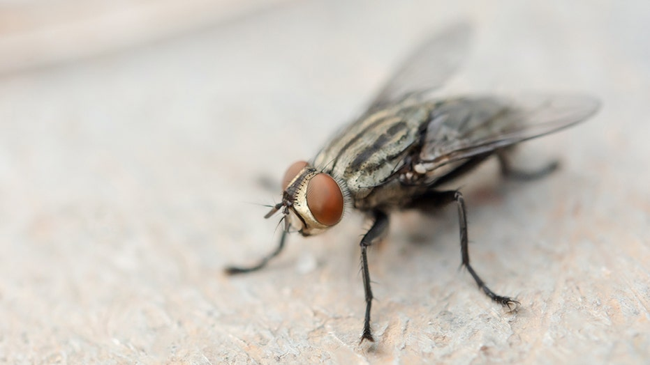 Man chasing fly accidentally blows up part of house: report
