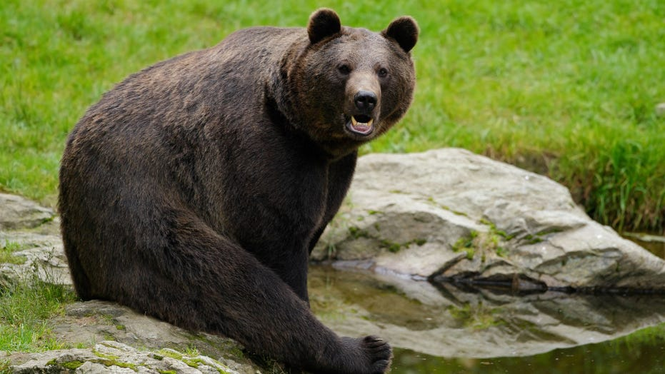 Archery hunter survives bear attack at Idaho national forest