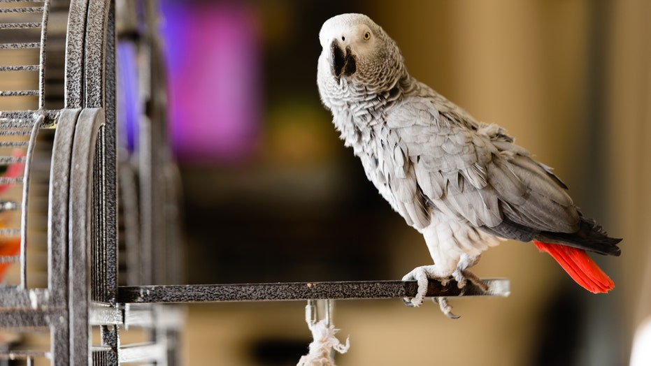 Zoo removes parrots from view after they kept swearing at guests