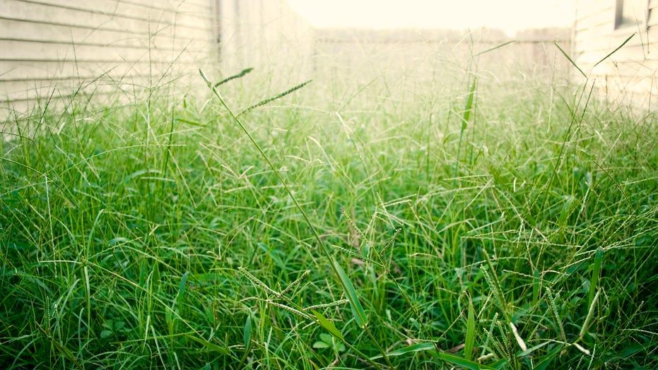 Homeowner shocked after heavy rain reveals secret buried under backyard garden