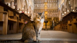 London cathedral honors beloved stray cat with memorial service