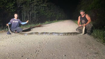 Florida hunters capture record breaking 18-foot Burmese python