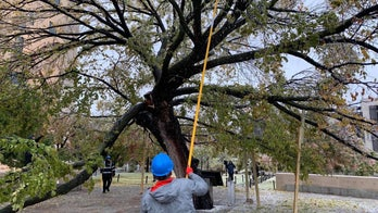 Ice storm damages Survivor Tree at Oklahoma City National Memorial, over 300K without power