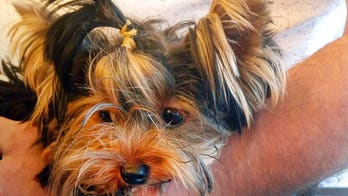 Dog's death at New York airport's quarantine facility sparks legal fight