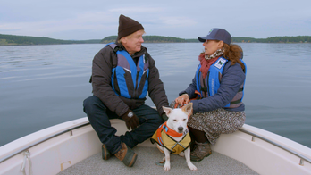 Rescue dog helps scientists save orcas — by sniffing out their feces