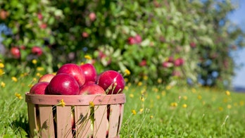 Coronavirus outbreak at Vermont apple orchard sickens dozens of migrant workers