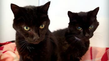 21-year-old cat brothers receive hundreds of adoption applications in UK