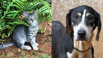 Animal rescue group flies hundreds of pets from Hawaii to northwest US