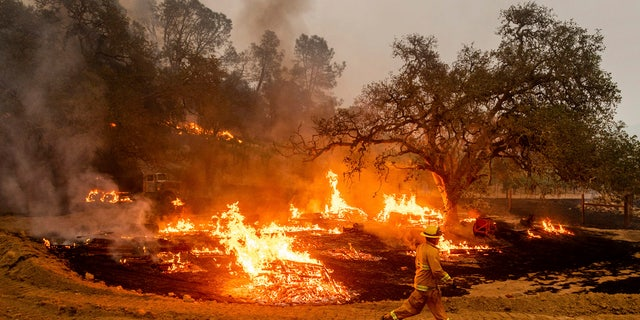 In this Oct. 1, 2020, file photo, a firefighter runs past flames while battling the Glass Fire in a Calistoga, Calif., vineyard.