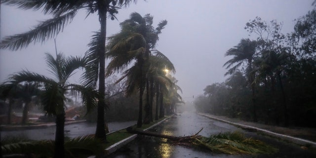 A fallen palm tree left by Hurricane Delta in Cancun, in Cancun, Mexico, Wednesday, Oct. 7, 2020.